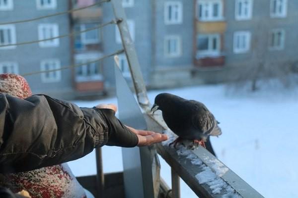 Как избавиться от голубей на балконе: простые способы.